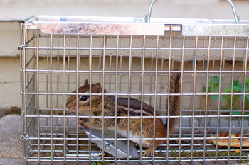 Rodent Trapping West Palm Beach