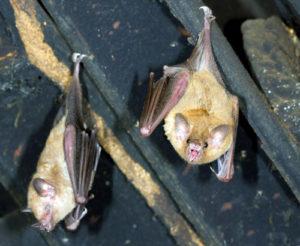 West Palm Beach Bats