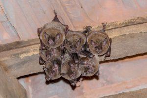 Bat Exterminaton